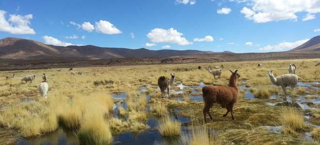 Fotos de la ciudad de iquique chile 49